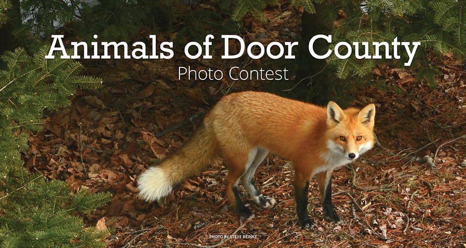 Animals of Door County